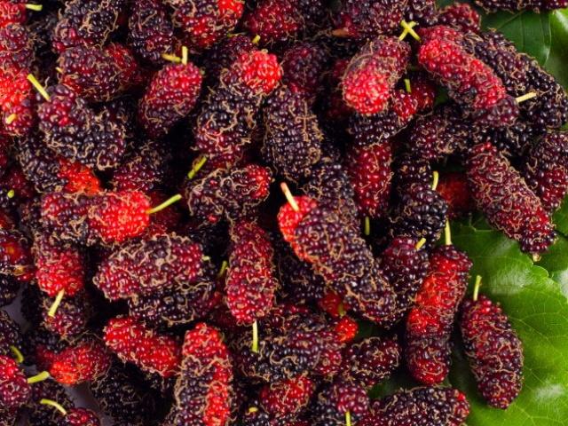 quais-cha-de-maleficios-menopausa-fruta-brasil-emagrece-tipos-de-planta